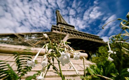 Tour Eiffel - Fashionvictress